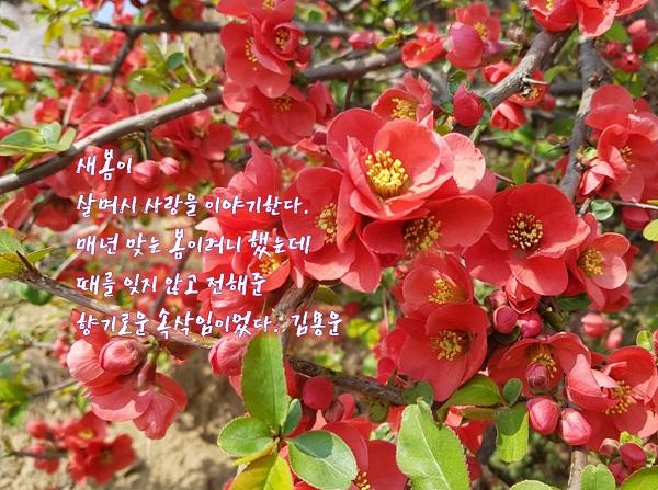 새봄이 편집1.jpg