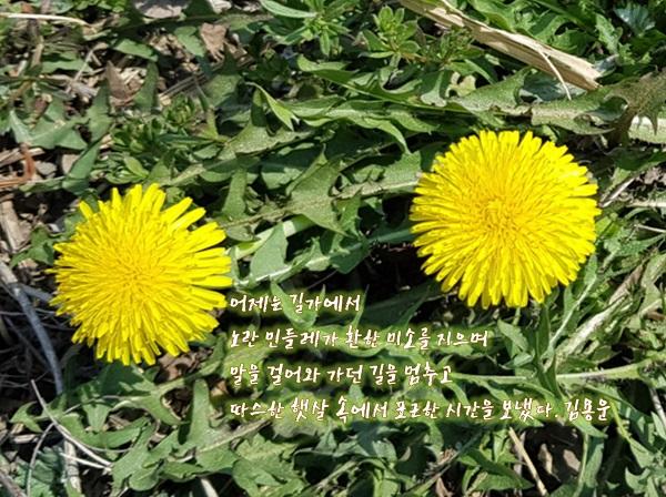 새봄이 편집2.jpg