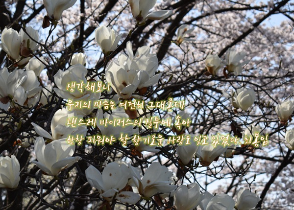 봄이 왔네 편집2.jpg